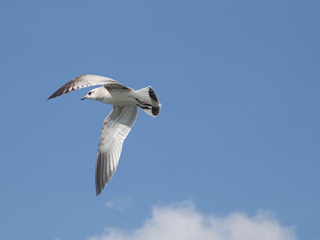 140728fågel