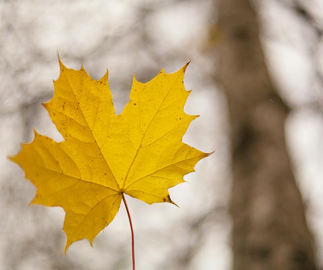141022ordpåå-löv