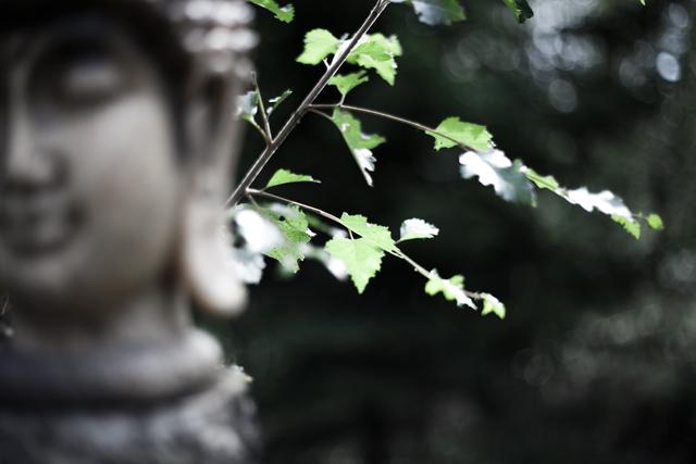 buddha IMG_0182