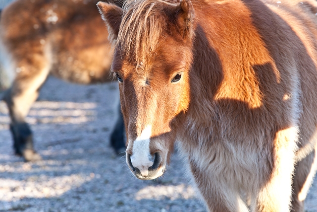 hästIMG_5848