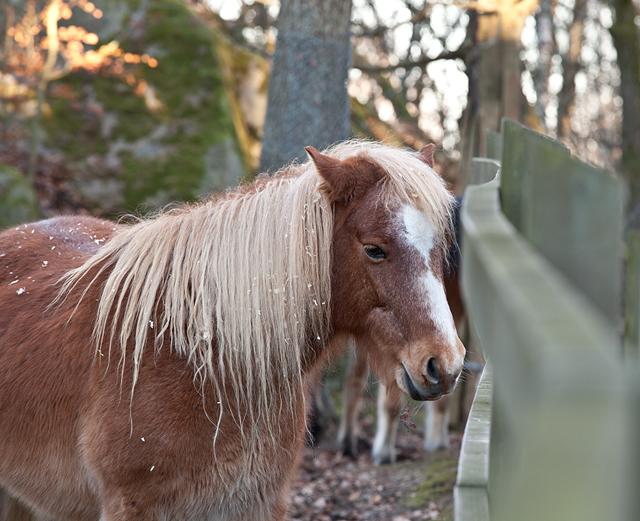 hästIMG_5854
