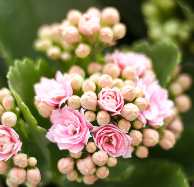 blomma-balkongIMG_6663