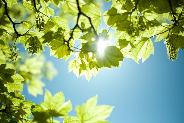 träd-slottsskogenIMG_6691