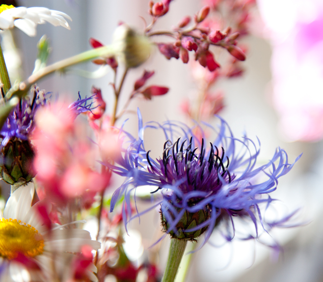 blommor-IMG_7034