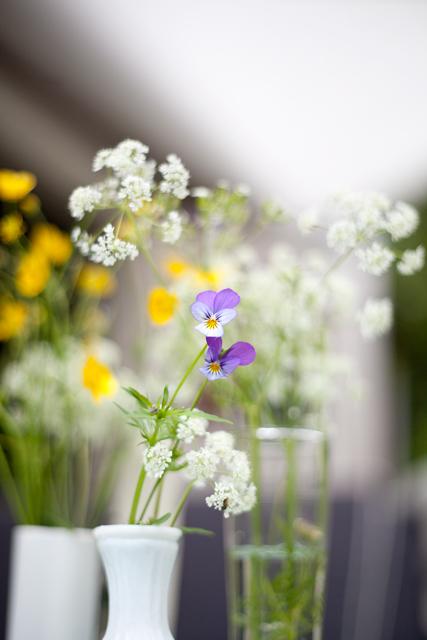 viol-blommor-midsommarIMG_7076