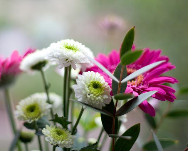 blommorIMG_7079