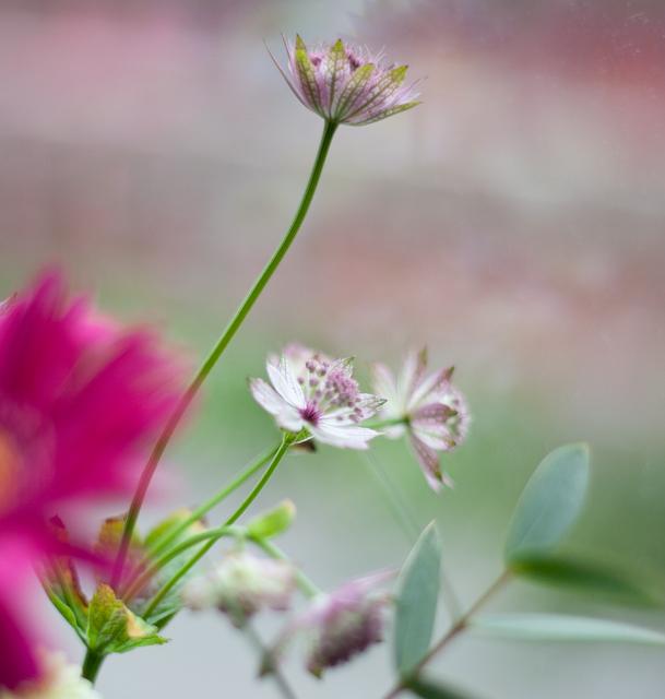 blommorIMG_7080