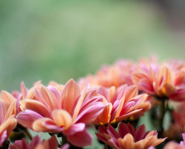 blommorIMG_7083
