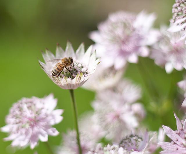 botaniska-biIMG_7121