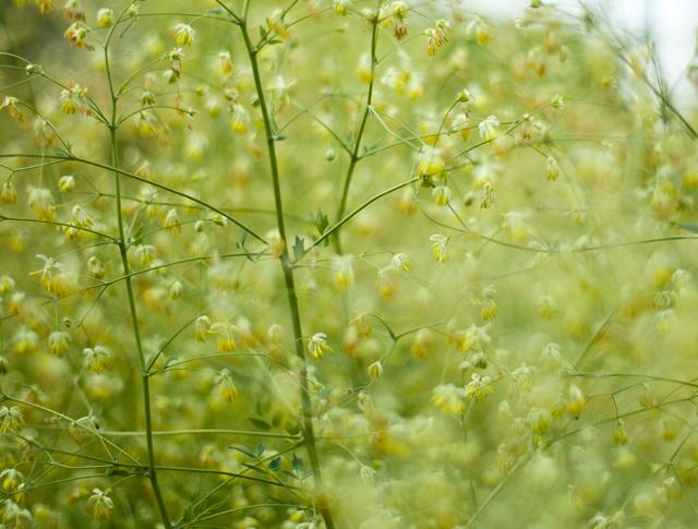 botaniska-grönIMG_7108