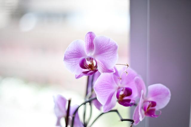 orkidee-IMG_7198