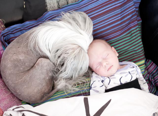 li-stella-sover