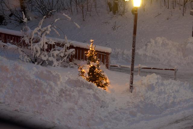 gran-snö
