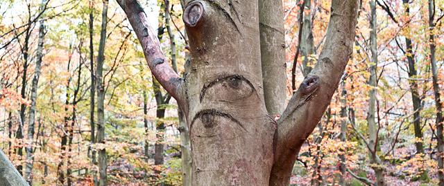 ögon-träd