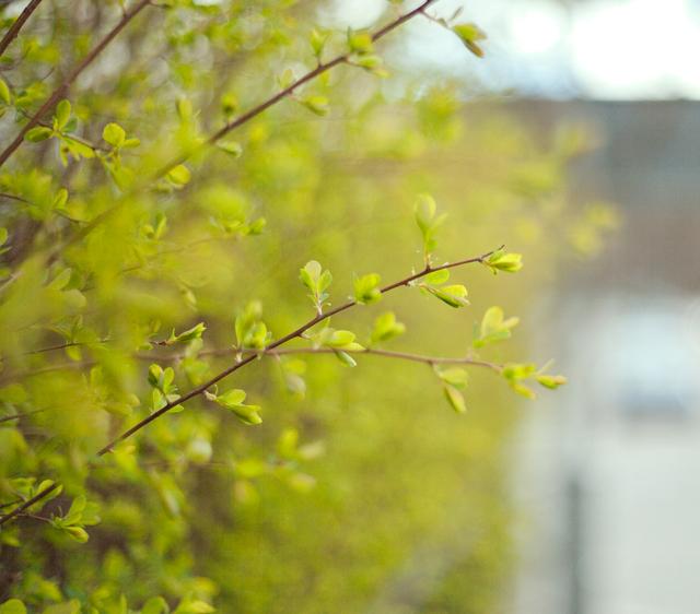 buske-grön