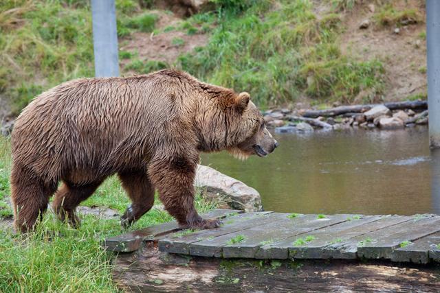 bjorn-brygga-zoo