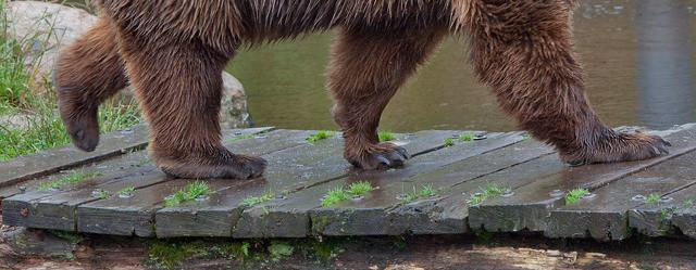 bjorn-tassar-zoo