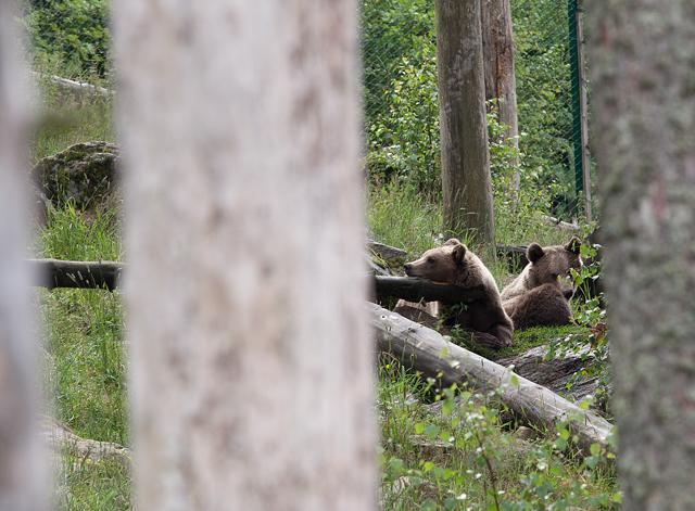 bjorn-babis-zoo
