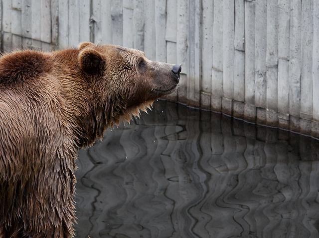 bjorn-blot-zoo