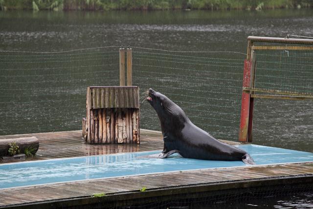 sjolejon-regn-zoo