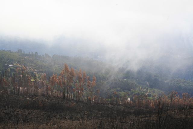 brand-skog-berg-portugal